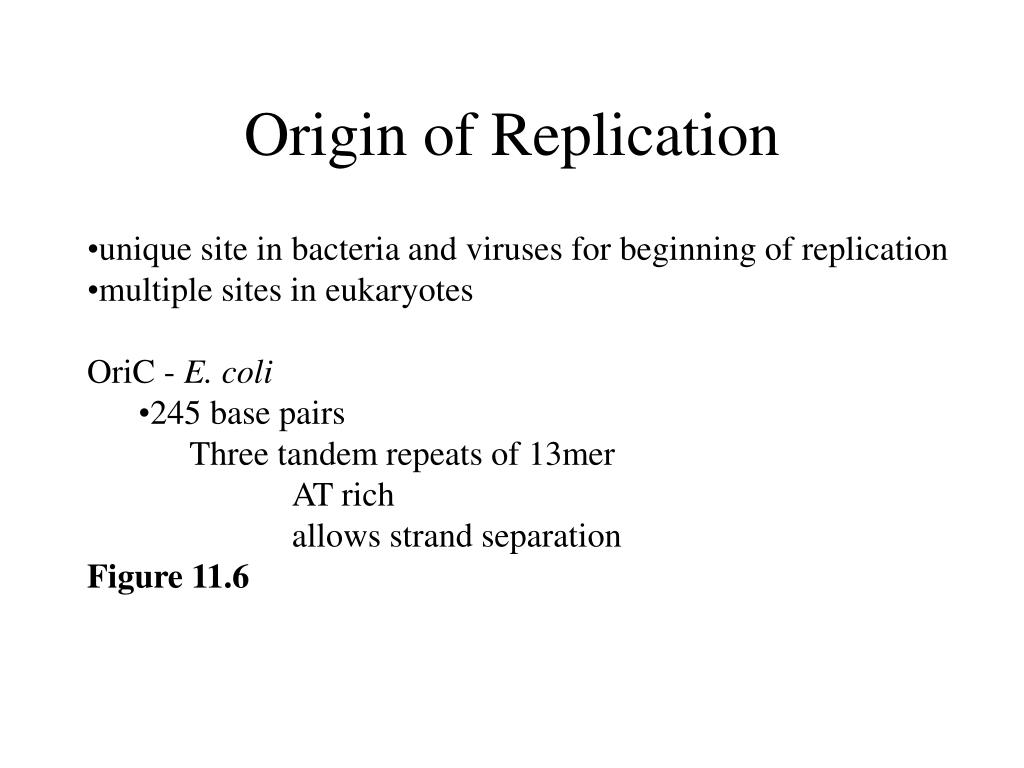 Origin of Replication