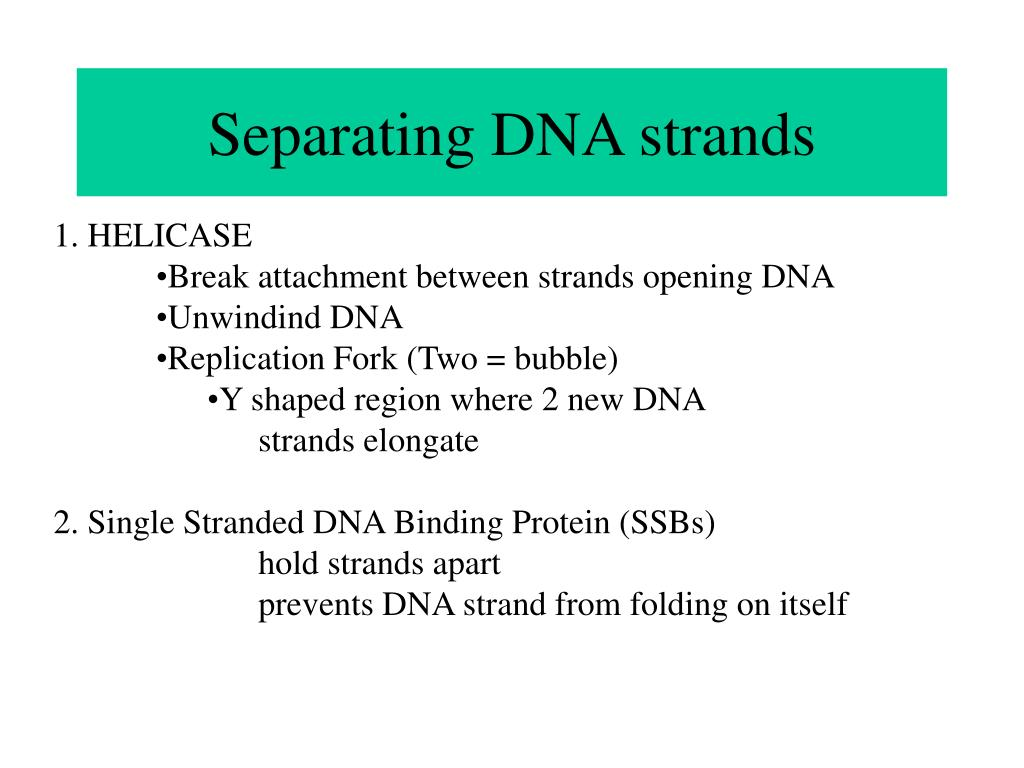 Separating DNA strands