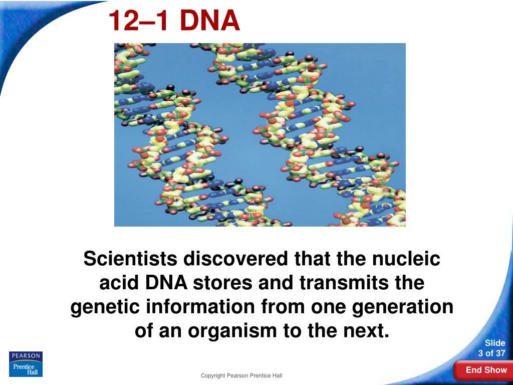12–1DNA