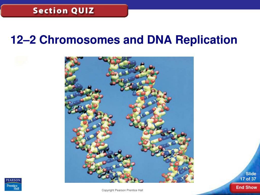 12-2Chromosomes and DNA Replication