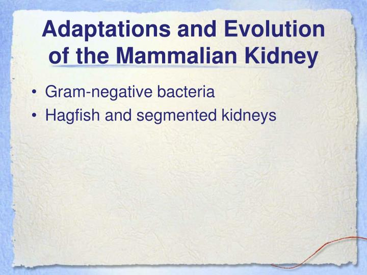 Adaptations and Evolution of the Mammalian Kidney