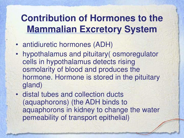 Contribution of Hormones to the Mammalian Excretory System