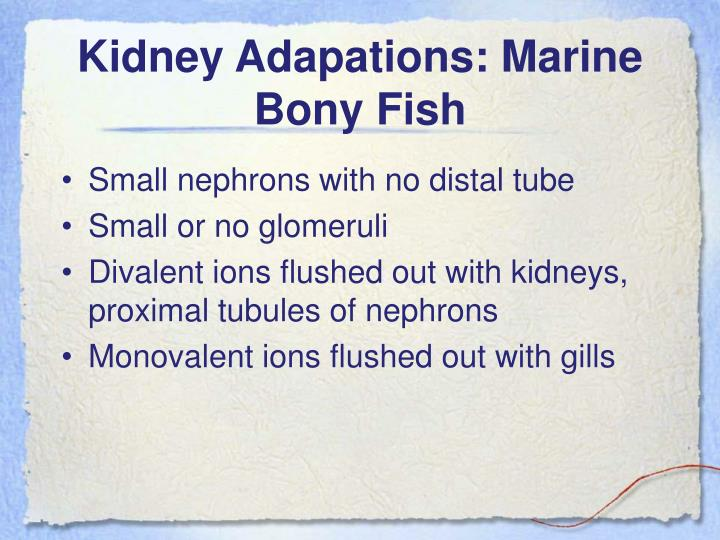 Kidney Adapations: Marine Bony Fish