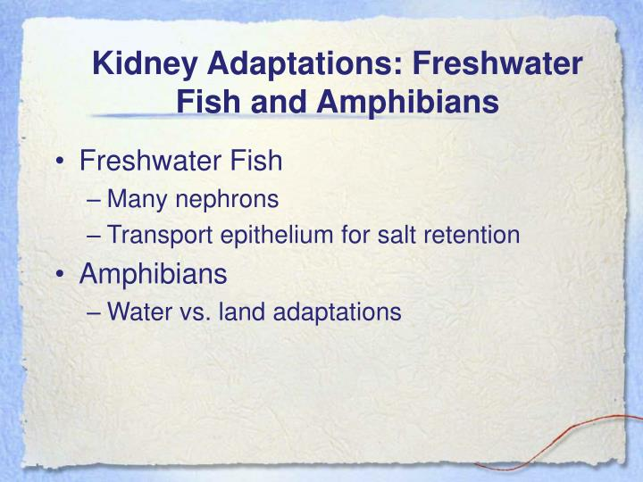 Kidney Adaptations: Freshwater Fish and Amphibians