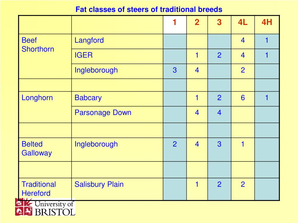Fat classes of steers of traditional breeds