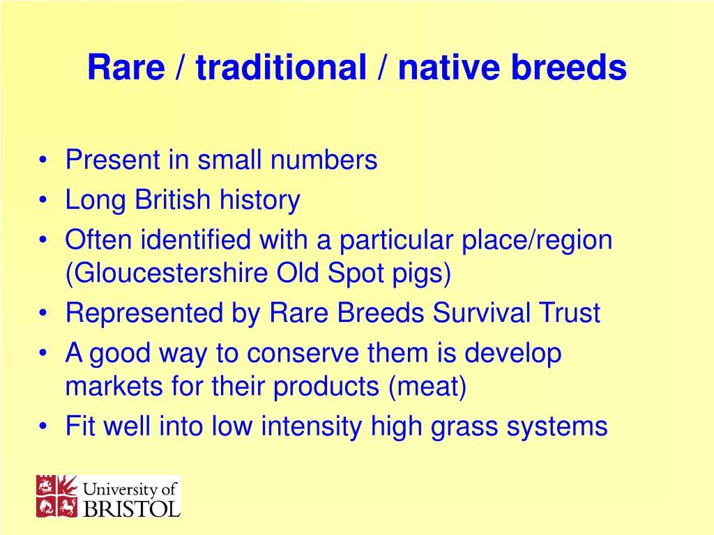 Rare / traditional / native breeds