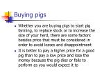 buying pigs