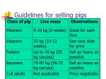 guidelines for selling pigs