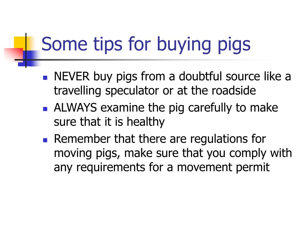 Some tips for buying pigs