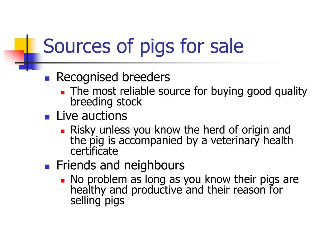 Sources of pigs for sale