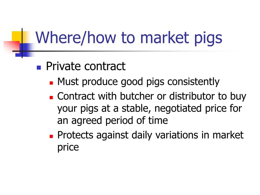 Where/how to market pigs