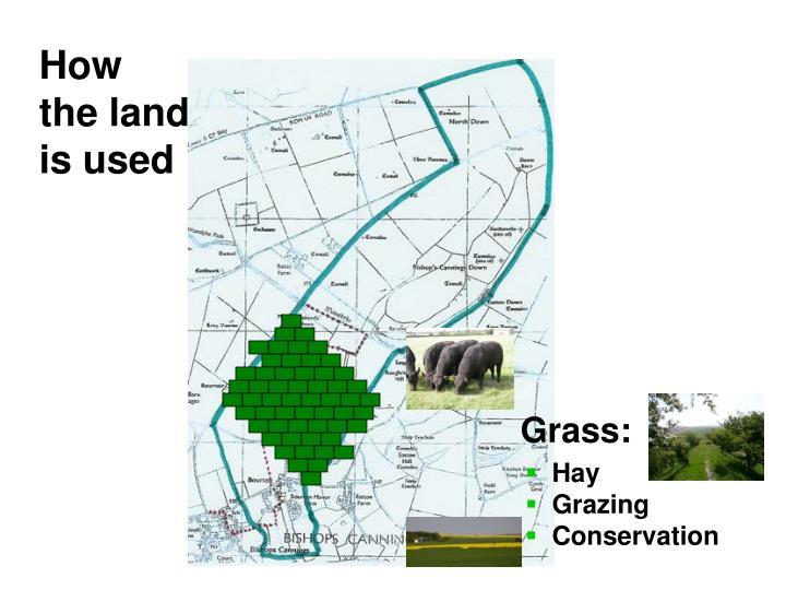 Grass: