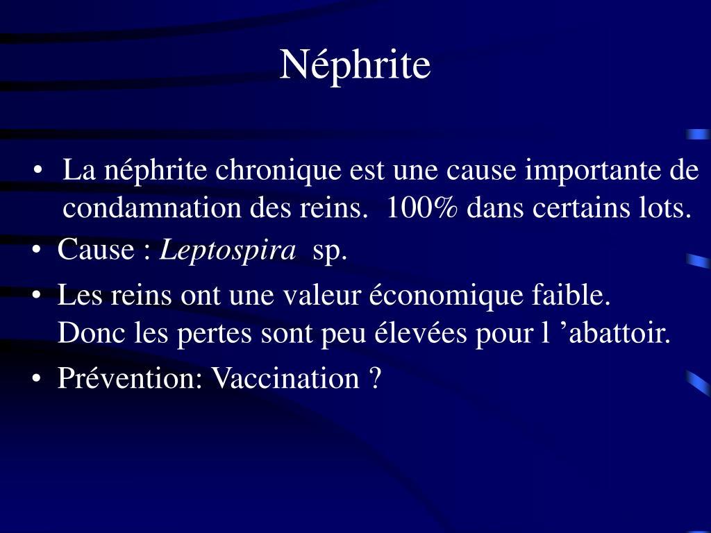 Néphrite