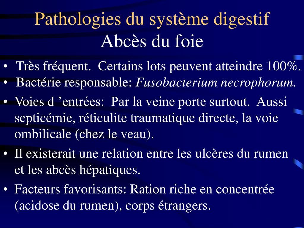 Pathologies du système digestif