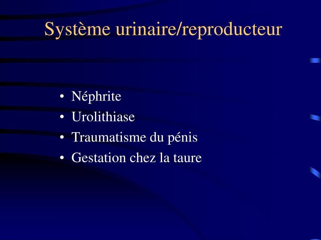 Système urinaire/reproducteur