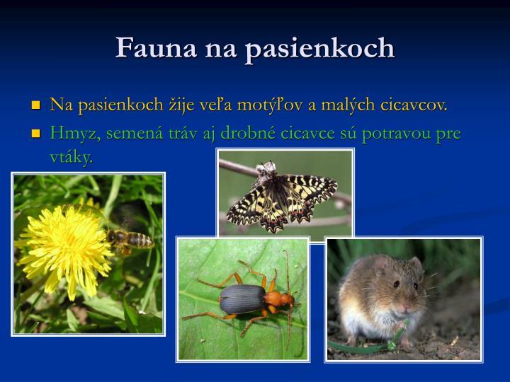 Fauna na pasienkoch
