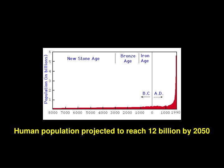 Human population projected to reach 12 billion by 2050