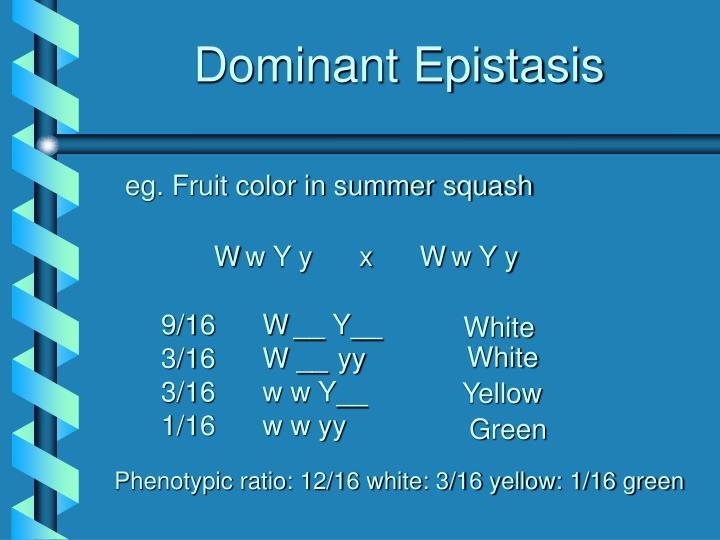 Dominant Epistasis