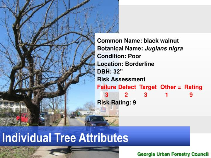 Individual Tree Attributes