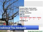 individual tree attributes