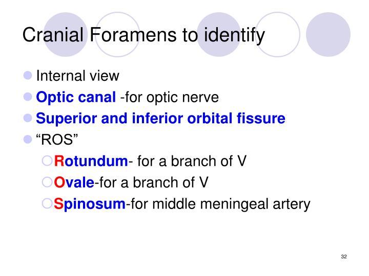 Cranial Foramens to identify