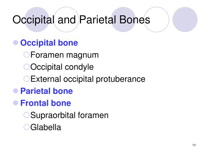 Occipital and