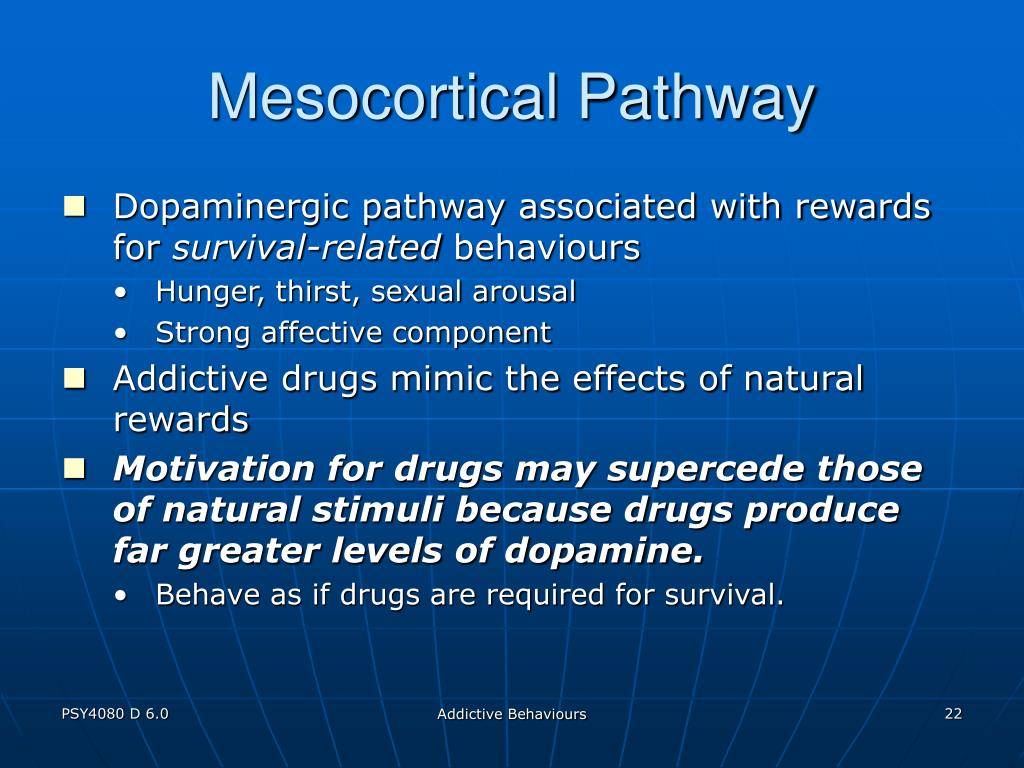Mesocortical Pathway
