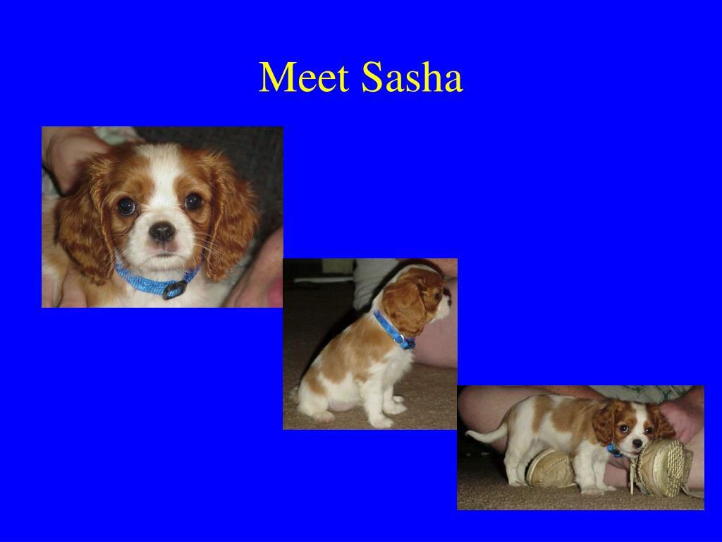 Meet Sasha