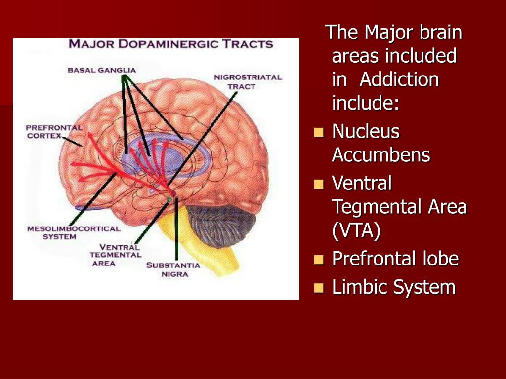 The Major brain areas included in  Addiction include: