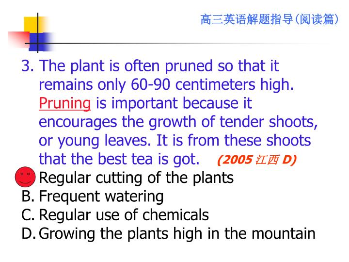 3. The plant is often pruned so that it remains only 60-90 centimeters high.