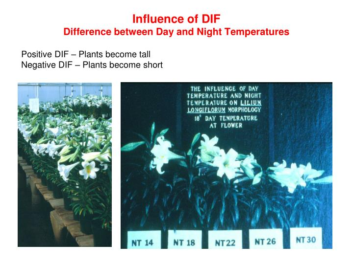Influence of DIF