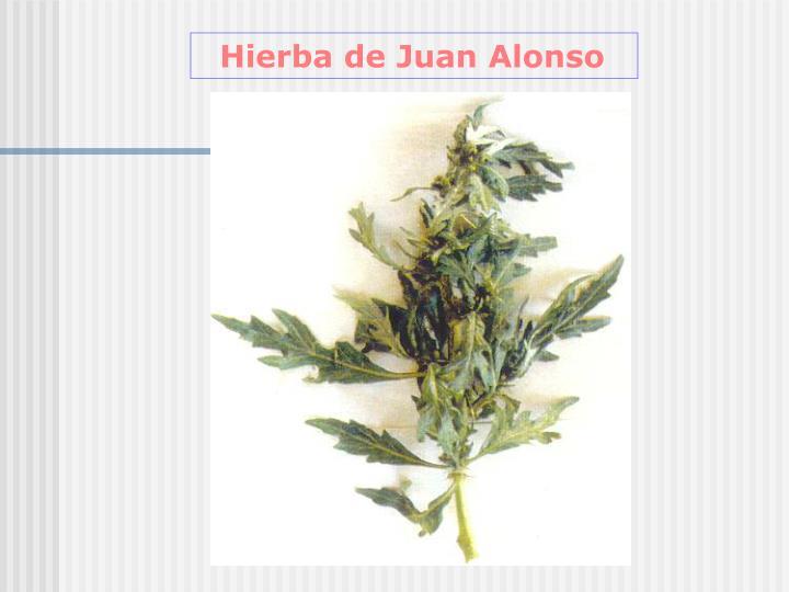 Hierba de Juan Alonso