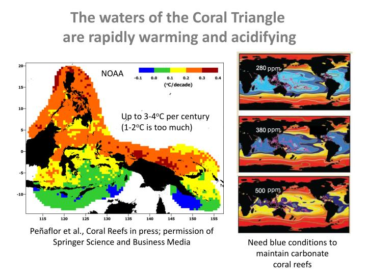The waters of the Coral Triangle