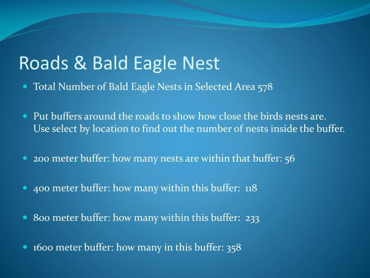 Roads & Bald Eagle Nest