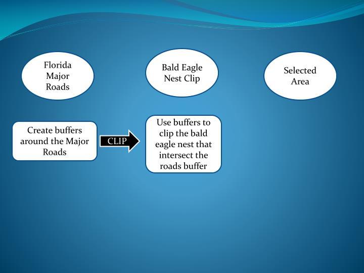 Bald Eagle Nest Clip