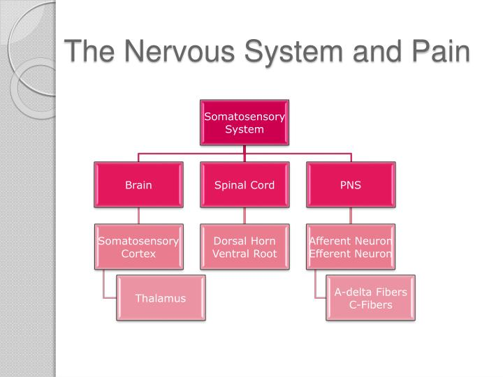 The nervous system and pain1
