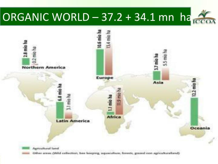 ORGANIC WORLD – 37.2 + 34.1