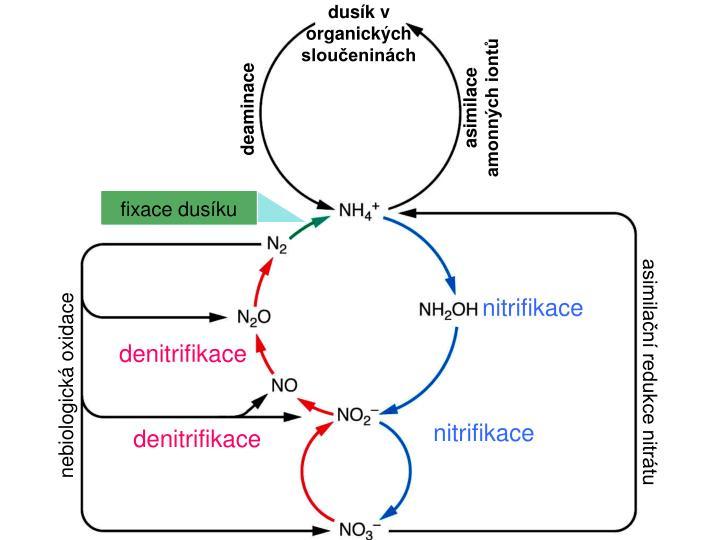 dusík v organických sloučeninách