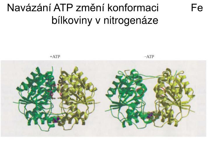 Navázání ATP změní konformaci           Fe bílkoviny v nitrogenáze