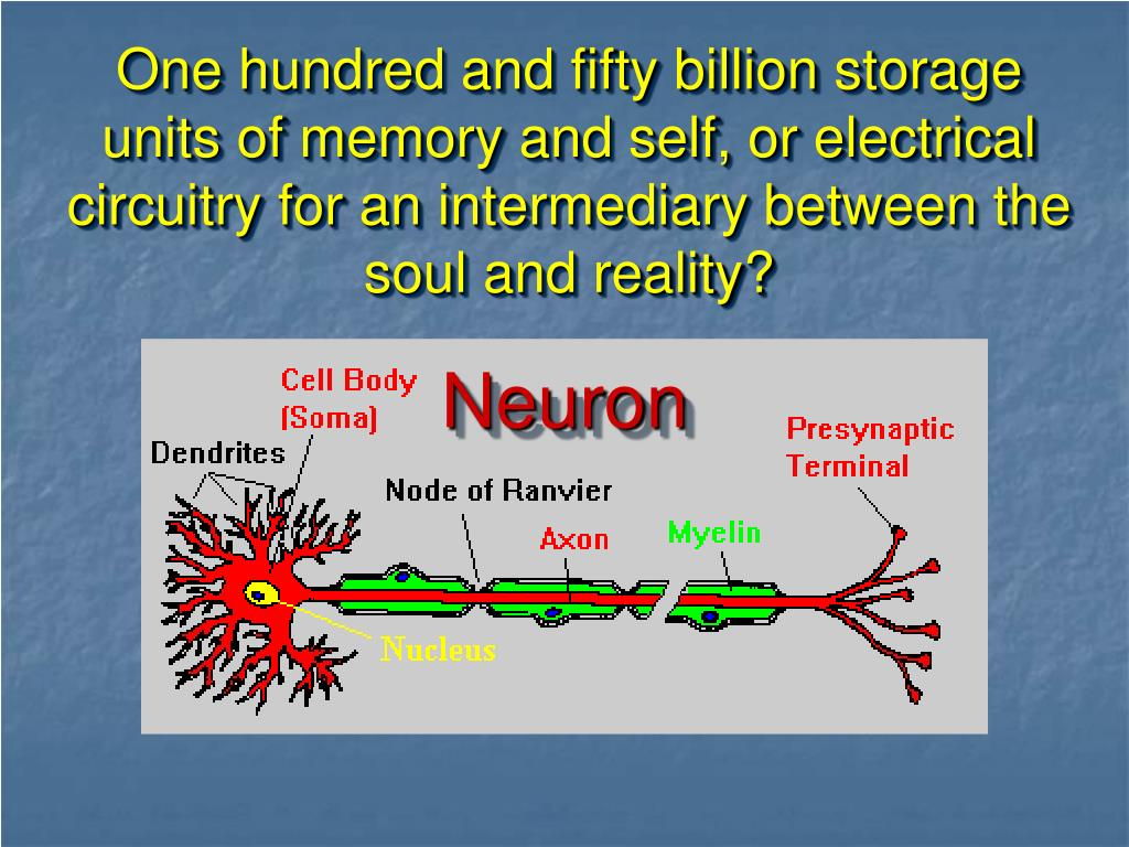 One hundred and fifty billion storage units of memory and self, or electrical circuitry for an intermediary between the soul and reality?