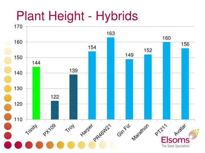 Plant Height - Hybrids