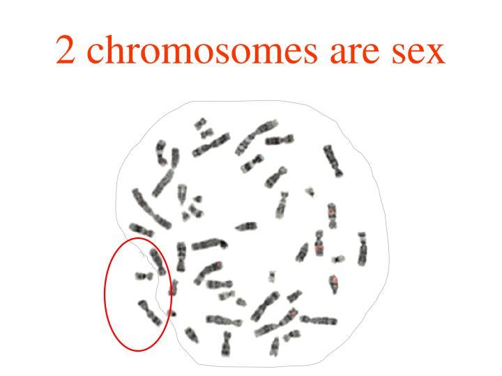 2 chromosomes are sex