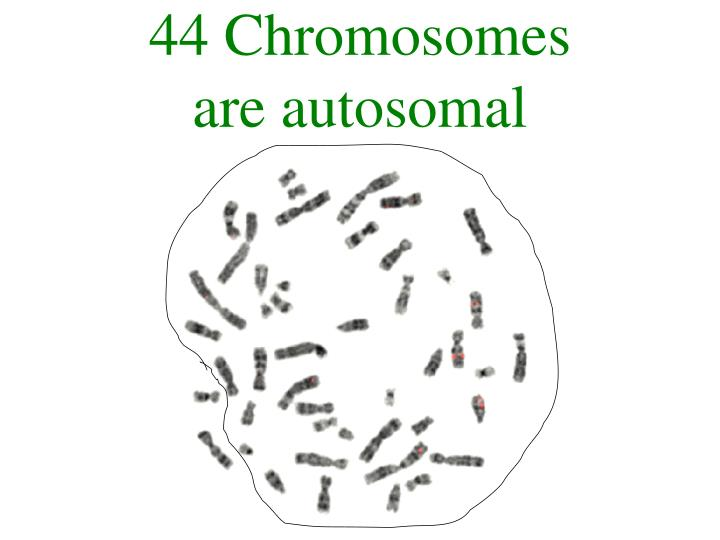 44 Chromosomes