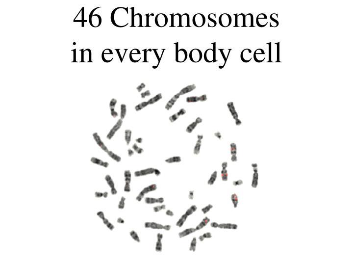 46 Chromosomes