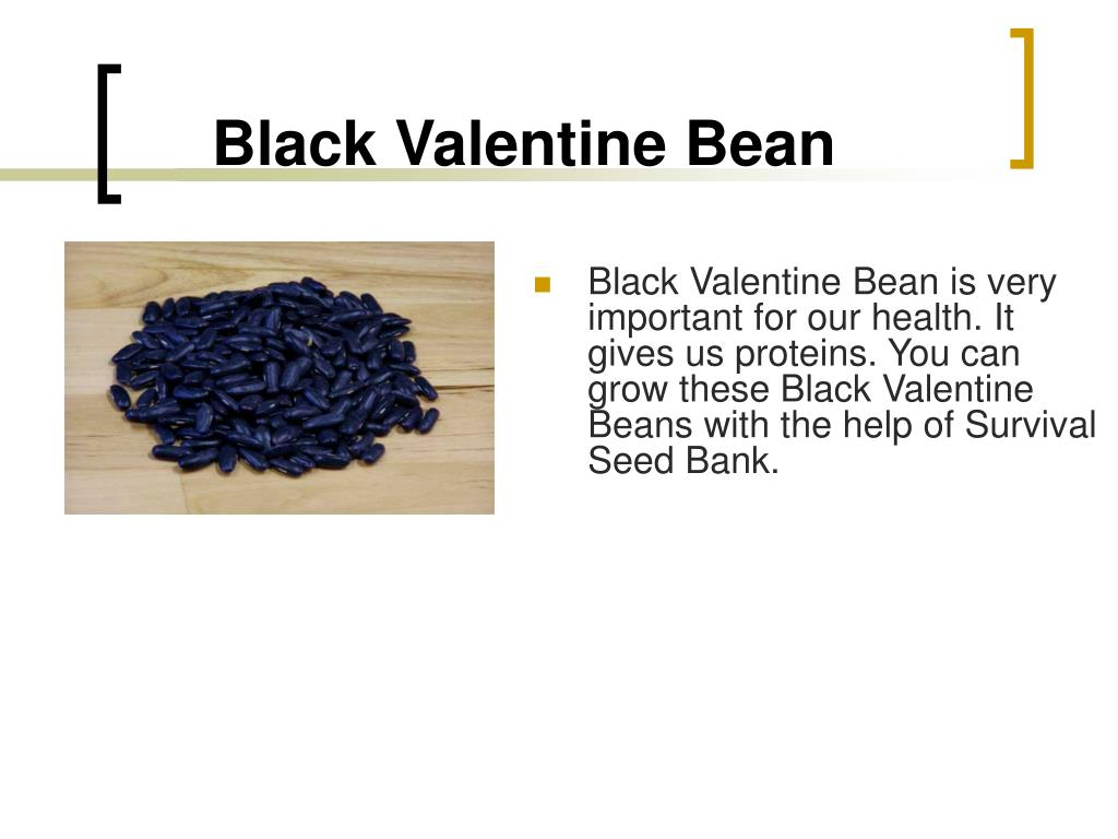 Black Valentine Bean