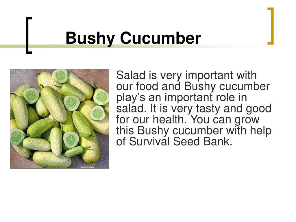 Bushy Cucumber