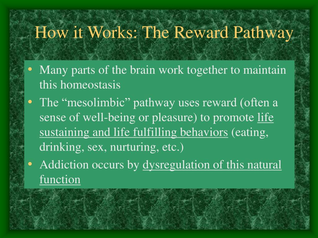 How it Works: The Reward Pathway