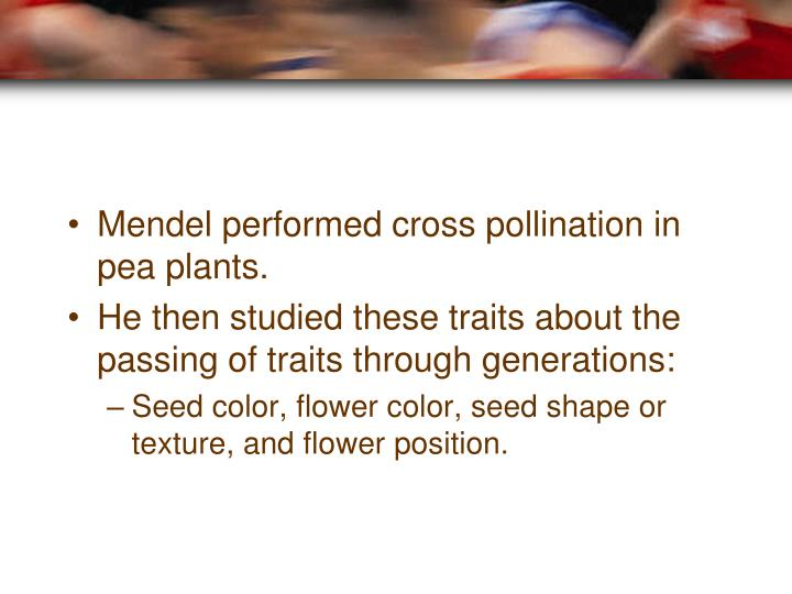 Mendel performed cross pollination in pea plants.