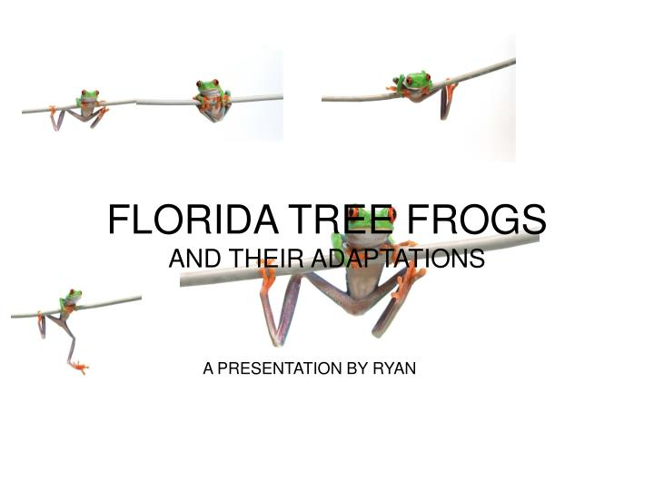Florida tree frogs and their adaptations
