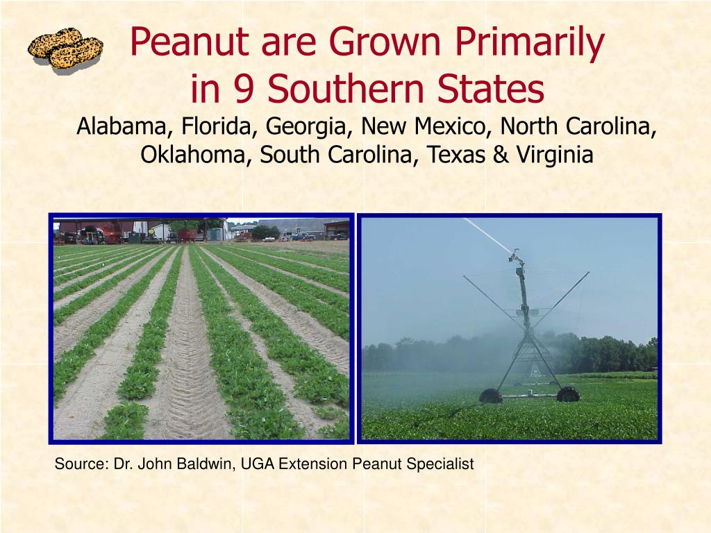 Peanut are Grown Primarily